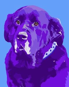 Dog portrait in process