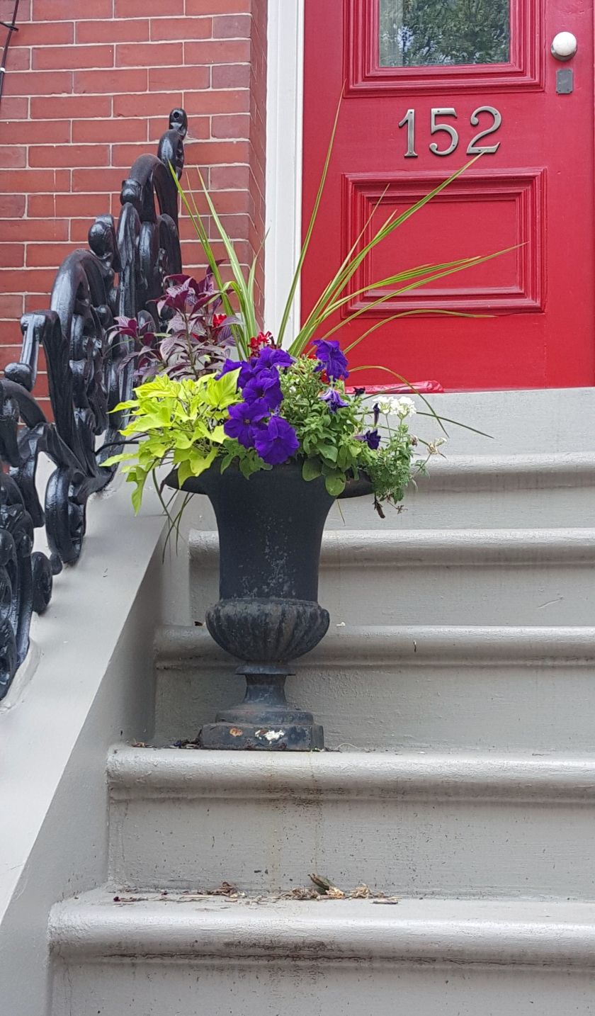South End stoop Paula Ogier
