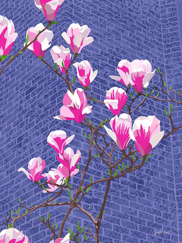 P_Ogier_Back_Bay_Magnolias